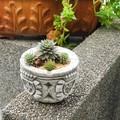 使い込む程味が出ます【Gardening Spanish Stone】スペイン製ガーデニング砂岩アシュトレイ8cm