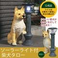 【新生活】【直送可】ご帰宅を歓迎♪ソーラーライト付柴犬 「タロー」【玄関】【ガーデニング】
