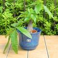 【イタリア製】鉢カバー 陶器 青 テラコッタ ブルー フリル アンティーク調 《底穴ナシ》