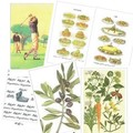 【イタリア伝統のステーショナリー】tassotti(タソッティ)のグリーティングカード