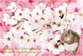 ハムスターと桜★ポストカード★