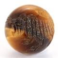 【天然石彫刻ビーズ】タイガーアイ 10mm (素彫り) 虎【天然石 パワーストーン】