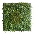 【ウォールグリーンデコール】Green Wall Decor ベイビーリーフ Design