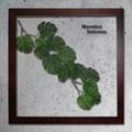 インテリアグリーンアート/ForestDeco Monstera インテリアグリーンアート/Deliciosa3