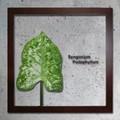 インテリアグリーンアート/ForestDeco Syngonium Podophyllum