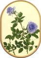 山田道惠 ブルーへブン 多目的カード