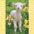 Paper+Design ペーパーナプキン  (羊)