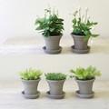 [ボタニカル]お水のいらない植木鉢