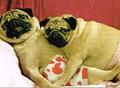 AVANTI PRESS バレンタインカード <犬×ハートのトランクス>