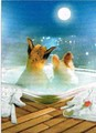 AVANTI PRESS バレンタインカード <犬×温泉と月>
