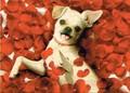 AVANTI PRESS バレンタインカード <犬×花びら>