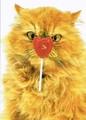 AVANTI PRESS バレンタインカード <猫×ハートキャンディ>