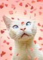 AVANTI PRESS バレンタインカード <猫×ハート>