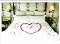 PALM PRESS バレンタインカード <ベッド×ハート>