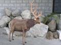 安全性・本物のような質感・感触にこだわった HANSA 製品『オジカ』牡鹿・男鹿 【3366】
