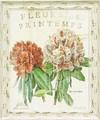 スー シェルバッハ アートフレーム【シャビー】フラワー/花柄<樹脂フレーム>