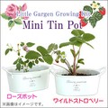リトルガーデン Mini Tin Pot ローズ/ワイルドストロベリー