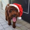 クリスマスアイテム サンタの帽子 大