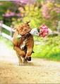 AVANTI PRESS バレンタインカード <犬×フラワー>