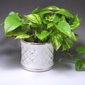 ポルトガル製 陶器 植木鉢・white&Gold【白・金】シャープな格子模様《底穴ナシ》小