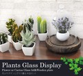 ショップやお部屋のインテリアに!お花やサボテンとガラス蓋・木皿のディスプレー