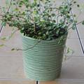 ポルトガル製 陶器 鉢カバー《底穴ナシ》 アンティーク風 グリーン 緑 ボーダー 横縞 13cm ミニ