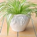 ポルトガル製  植木鉢 陶器 《底穴あり》 ホワイト グレープ ガーデニング  直植え用 22cm 6号鉢用