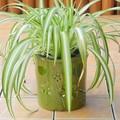 ポルトガル製 陶器 鉢カバー《底穴ナシ》 アンティーク風 花 レリーフ 光沢 グリーン 抹茶 緑 直径15cm