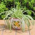 【イタリア製】鉢カバー 陶器 ブドウ 黄 紫 テラコッタ プランター カバー マジョリカ 《底穴ナシ》