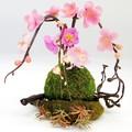 桜アレンジ S-04【春】【プレゼント】