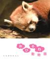 おひるね動物園