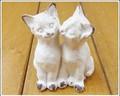 ブランガート 双子の子猫