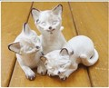ブランガート 三匹の子猫