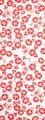 【日本製】 注染 手ぬぐい 朝顔 小紋 (赤)【和布華】