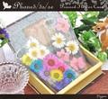 <スマホケース>【299シリーズ!】本物の花をちりばめた♪ iPhone SE/5s/5用押し花ケース