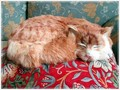 【英国雑貨】英国人に愛され続けている猫 Ship's Cat (Freddy)