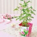 ミニバラ フローラルコンテナ ばら 薔薇 栽培キット