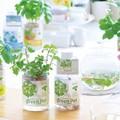 育てるグリーンペットハーブ 栽培キット セット 水栽培