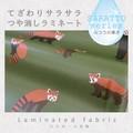 【生地】【布】【サラサラつや消しラミネート】 Lesser panda  ★50cm単位でカット販売