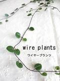 ちいさい丸い葉っぱ◆ワイヤープランツ