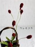 【秋物】【フラワーピック】秋を感じます◆ワレモコウ