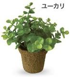 【人気の快適インテリアアイテム】光触媒インテリアグリーン ミニグリーン