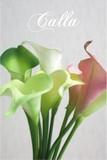 カラー 【造花】 31387