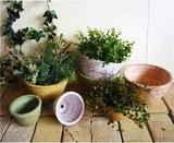 Pot Natural Miscellaneous goods Antique Miscellaneous goods