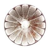 【皿】白花の5.5寸多用鉢