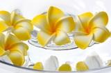 Frangipani Sponge Artificial Flower Yellow
