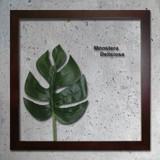 インテリアグリーンアート/ForestDeco Monstera Deliciosa1