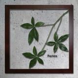 インテリアグリーンアート/ForestDeco Pachira