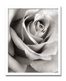 インテリアアート/Steven N.Meyers /Rose