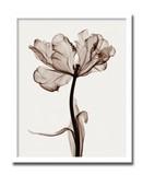 インテリアアート/Steven N. Meyers/Parrot Tulip I